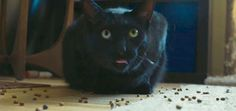 Catster Video: 5 Hacks for Keeping Your Cat Engaged While You're Away - Catster