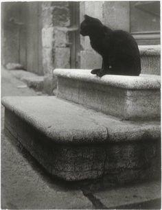 1945 - Le Chat Noir por Brassai seudónimo de Gyula Halász.