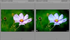 5 Ways to Use Lightroom Virtual Copies Better #photography #lightroom http://digital-photography-school.com/5-ways-to-use-lightroom-virtual-copies-better/