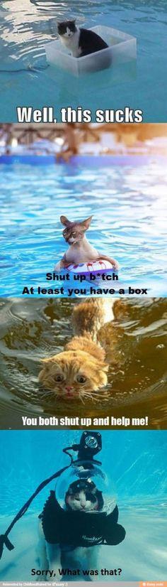 Cats Vs Water