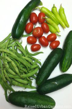 summer time harvest! so good to grow your own food. ~Mel @ RaisedUrbanGardens.com