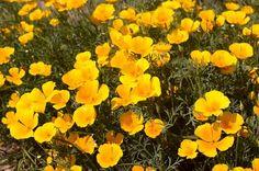 9 kerti virág, amit napos helyre is ültethetsz és még locsolni sem kell! - Bidista.com - A TippLista! Flower Beds, Fall Decor, Gardening, Outdoor, Bonsai, Sun Rays, Plants, Outdoors, Lawn And Garden