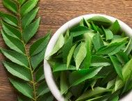 Herb of the Month: Neem
