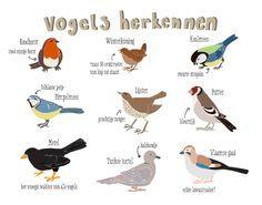 soorten vogels spanje - Google zoeken