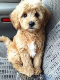 That's so cute it's like a teddy bear well it looks like one :)