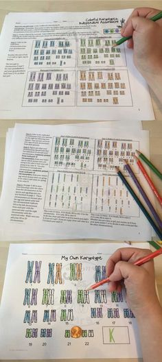 Color My Own Karyotype: This activity is great for explaining independent assortment.  It clearly shows how chromosomes are inherited from grandparents to create a unique individual!  My students use this to color chromosomes and create their own karyotype posters and we display them on the wall to show how independent assortment creates unique individuals.