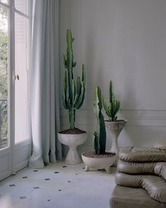 The Best Indoor Plants for Your Office or Home Interior Plants, Home Interior, Interior Design, Design Art, Indoor Garden, Indoor Plants, Home And Garden, Cacti And Succulents, Cactus Plants