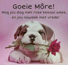 Wish Quotes, Funny Quotes, Qoutes, Happy Birthday Wishes Quotes, Afrikaanse Quotes, Goeie More, Good Night Quotes, Godly Man, Special Quotes