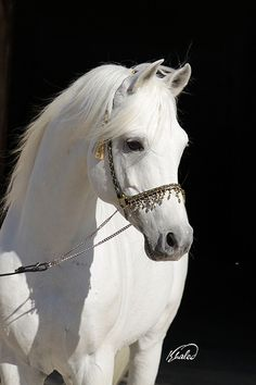 llbwwb: For the Horse Lovers