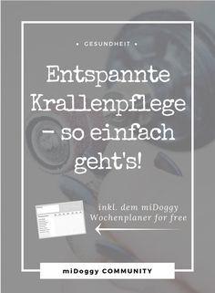 Learn How To Create An Interior Design Website That Gets You Clients. Hund  || Pflege Der Krallen || Krallen Kürzen || Tippps
