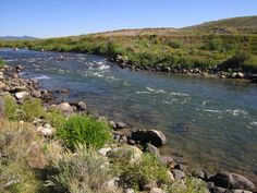 """Green River, up by mile marker 11, outside Jackson Hole, WY. Full of 8-12"""" Brown trout"""