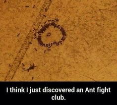 The first rule of Ant Fight Club is you don't talk about Ant Fight Club. hahaha