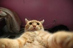 These Animal 'Selfies' Prove That Cats, Dogs And Sloths Take The Best Self-Portraits (PHOTOS)