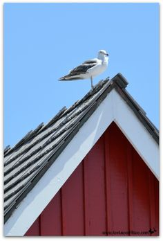 Seagull on a red bui