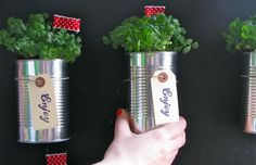 soup can gardening