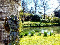 #kokedama & co.: Strassoldo castle, new romantic #ceropegia woody
