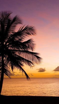 19 Ideas Photography Nature Wallpaper Palm Trees For 2019 Summer Wallpaper, Beach Wallpaper, Nature Wallpaper, Palm Tree Sunset, Palm Trees, Amazing Photography, Nature Photography, Strand Wallpaper, Tropical Background