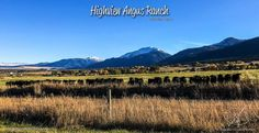 Highview Angus Ranch is located in the beautiful cattle country of Northeastern Oregon and under the Wallowa Mountains www.HighviewAngusRanch.com  Photography by Angelika Ursula Dietrich - www.angelikadesigns.com