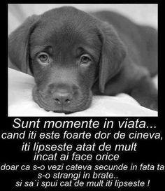Labrador Retriever, Memories, 8 Martie, Words, Animals, Labrador Retrievers, Memoirs, Souvenirs, Animales