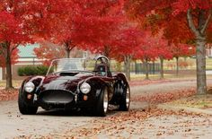 FFR car in autumn setting