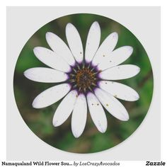 Namaqualand Wild Flower South Africa Classic Round Sticker