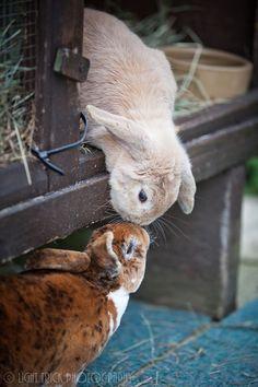 janetmillslove:  Bunny kisses moment love. Wild Fauna Love