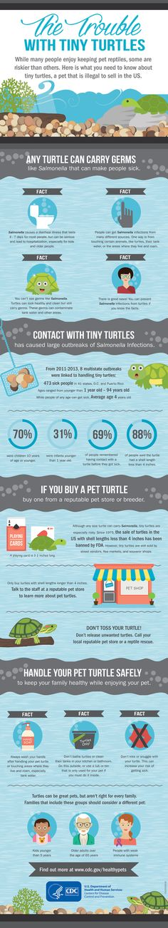 Kids love tiny turtles, but these cute reptiles are illegal to sell and can make people sick. This CDC infographic shares more info on tiny turtles and how you can keep your family healthy.