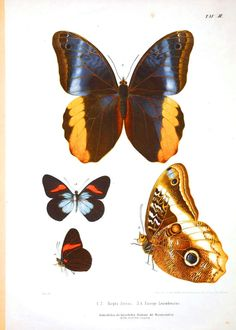 The Sum Of All Crafts: From Caterpillar to Chrysalis
