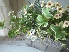 ペチュニアのブリキ寄せ植え #シャビー#アンティーク#寄せ植え#シック#antique#garden#shabby