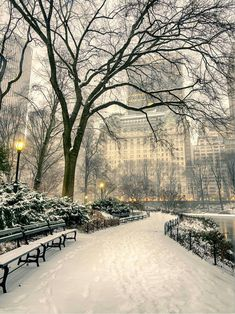 NYC central park covered in snow