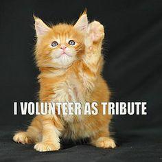 #Caturday, featuring Catniss Everdeen.