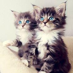 izmir kedi pansiyonu, izmir kedi oteli , izmir kaliteli kedi pansiyonu hizmetleri hem bütçenize dost şekilde hem de dostunuzu kucaklayacak şekilde verilir.