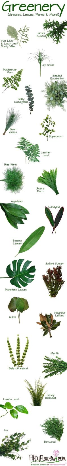 Greenery and fillers - types of ferns leaves etc for bouquet filler