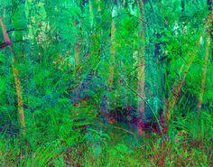 Justin James Reed - Landscape - Richmond, VA.