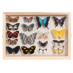 17 Butterflies In Frame