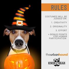 Who is ready for Ghouls Gimlets & Grrrowlers next Thursday? We are! If you're still working on your pup's costume here are some guidelines to keep in mind...  Judges will be neutral parties who don't know any canine contestants personally! Prizes include free walks & daycare!