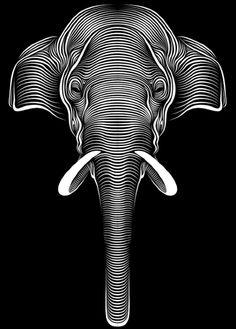 Animal portraits by Patrick Seymour