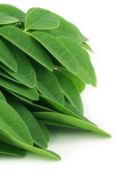 The Moringa Specialists Miracle Tree, Natural Skin Care, Plant Leaves, Organic, Plants, Moringa Oleifera, Woodland Forest, Vitamins And Minerals, Vitamin E