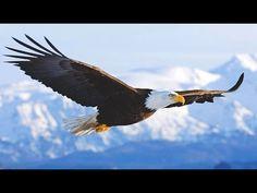La Vida Silvestre de la Fauna de Europa del Norte - YouTube