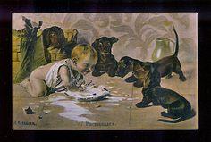 4 Dachshunds Watch Baby Splash in Their Milk Vintage Dachshund Postcard | eBay