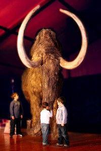 expo neandertal y mamut espai menut_opt