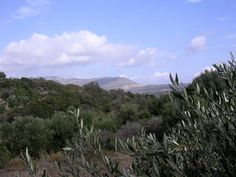 #Kythira #Greece #Olive #Harvest