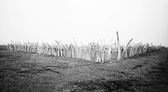 Cemetery with whalebone fence and gate, Point Hope, Alaska.