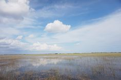 Shark valley - Everglades