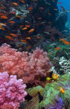 #Arrecifes #Coral, #Adrenalina, #Saonadreams