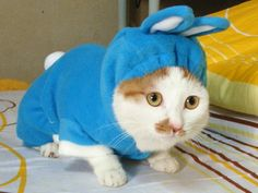 My Bunny-Kitten