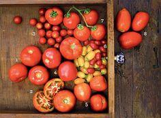 A variedades de tomates no mercado estimula os usos culinários do ingrediente
