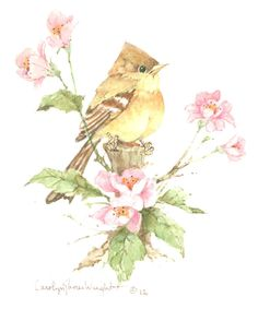 Yellow-Bellied Flycatcher watercolor $30.00