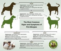 PAH  Does My Dog or Cat Have Allergies The Most Common Signs and ...