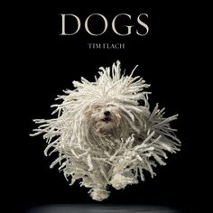 """Bad hair day! from Tim Flach's new book, """"Dogs: Gods"""""""
